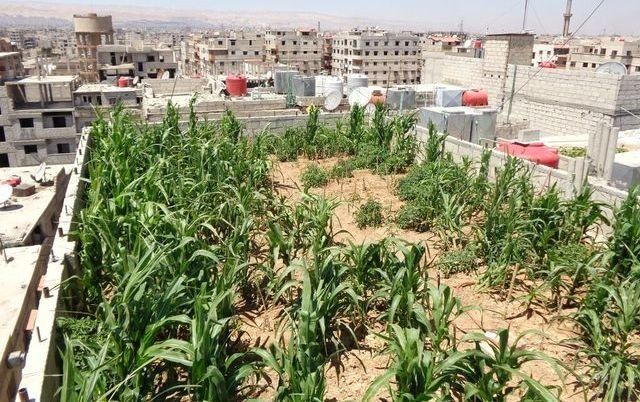 Rooftop gardens are popping across Damascus neighborhoods, allowing people to find new ways of feeding themselves.