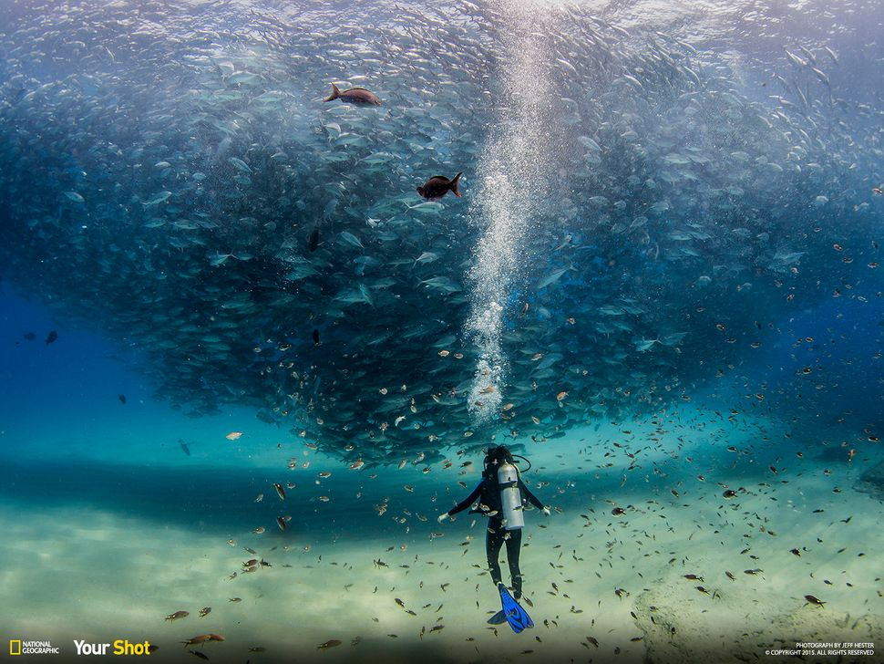 "Your Shot member Jeff Hester was drawn to make this image because, he says, ""I believe this is what our oceans should l"