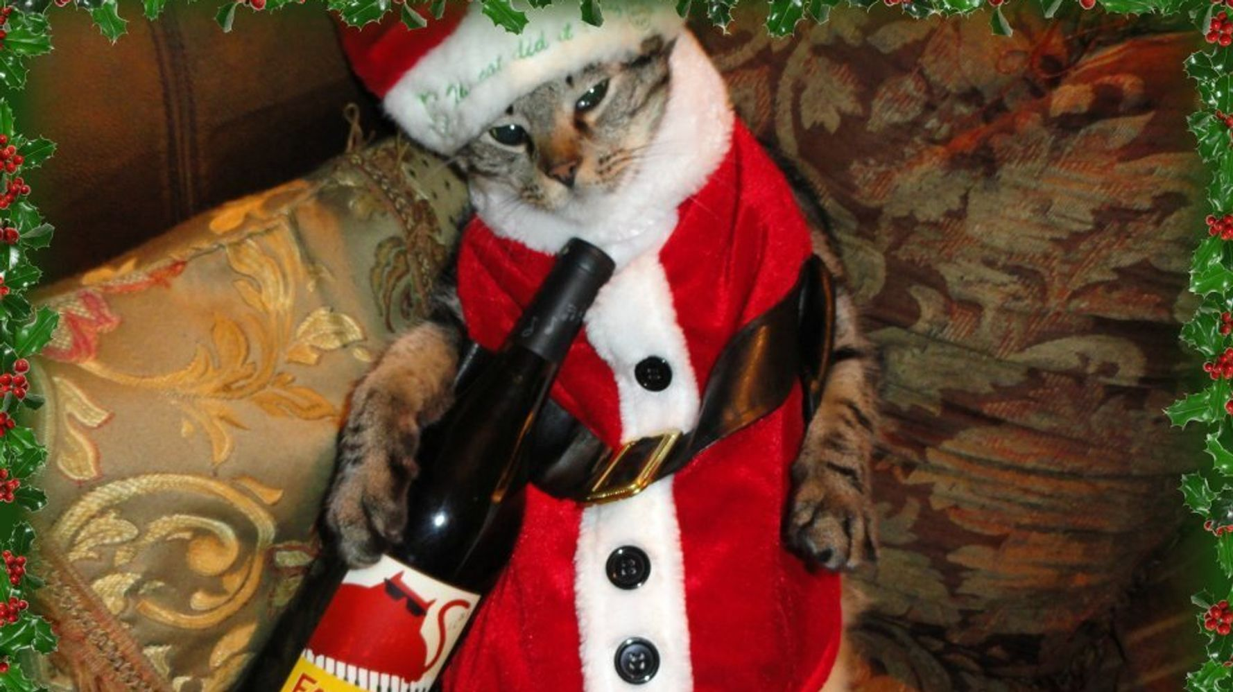 huffingtonpost.com on Flipboard: Cats Dressed Up For Christmas Are The  Greatest Gift This Holiday Season