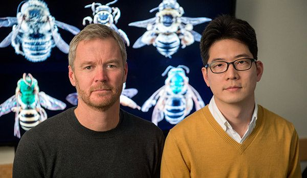 A research team led by Insu Koh (right) and Taylor Ricketts, bee experts at the University of Vermont's Gund Institute for Ec