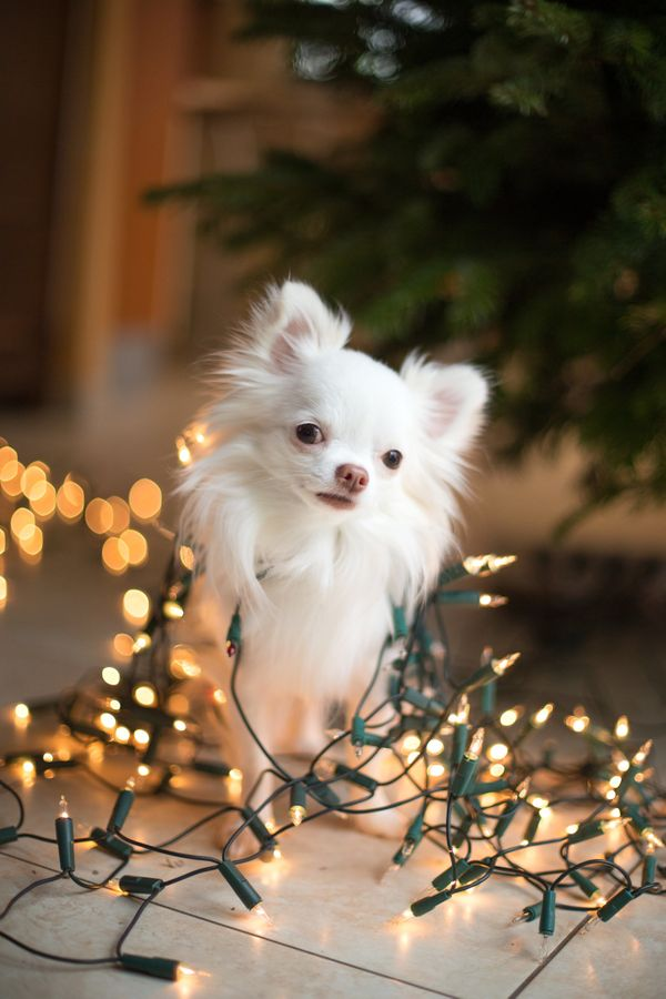 15 weird photos of people tangled in christmas lights huffpost - Dog Christmas Lights