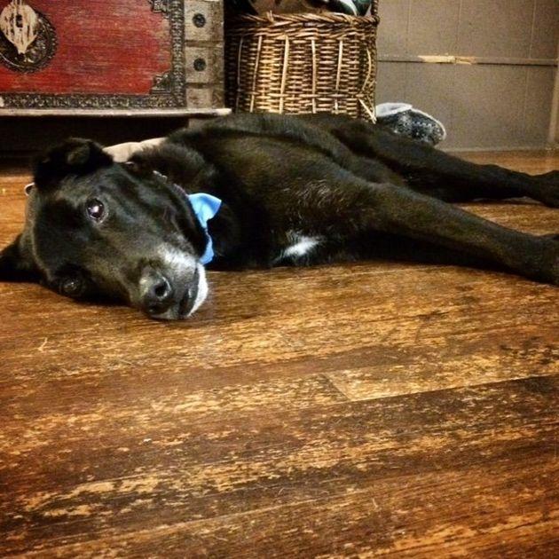 奇跡が起こった。盲目の老犬が生まれて初めて愛を知った。