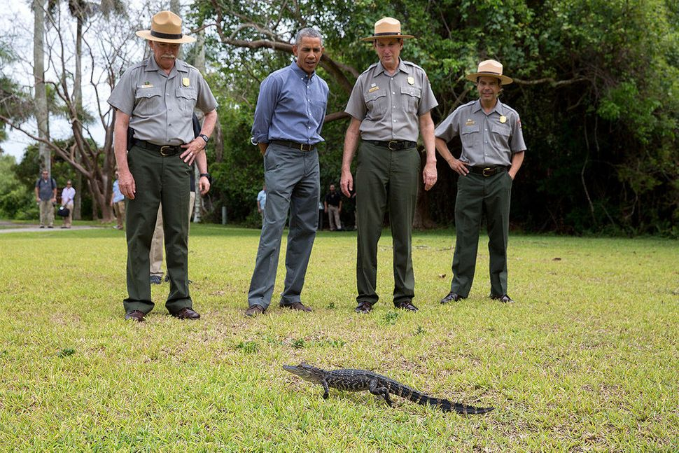 President Barack Obama and U.S. Park Service rangers view a small alligator during a tour at Everglades National Park in Flor