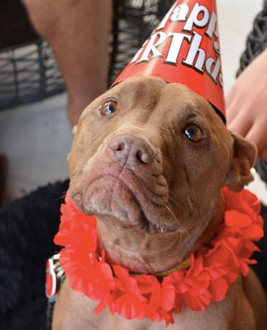 b41a1c3d2a8 The 10 Best Pit Bull Stories From 2015