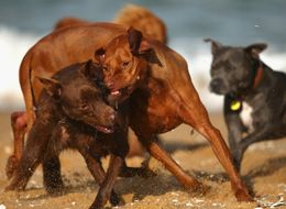 Yes, There Is A Smart Way To Break Up A Dog Fight