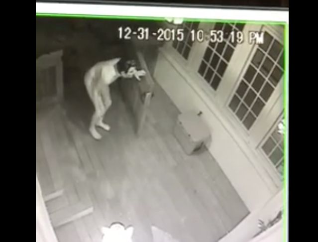 A man wearing only a sock and a rubber mask was filmed prowling around outside an Alabama couple's home New Year's Eve.