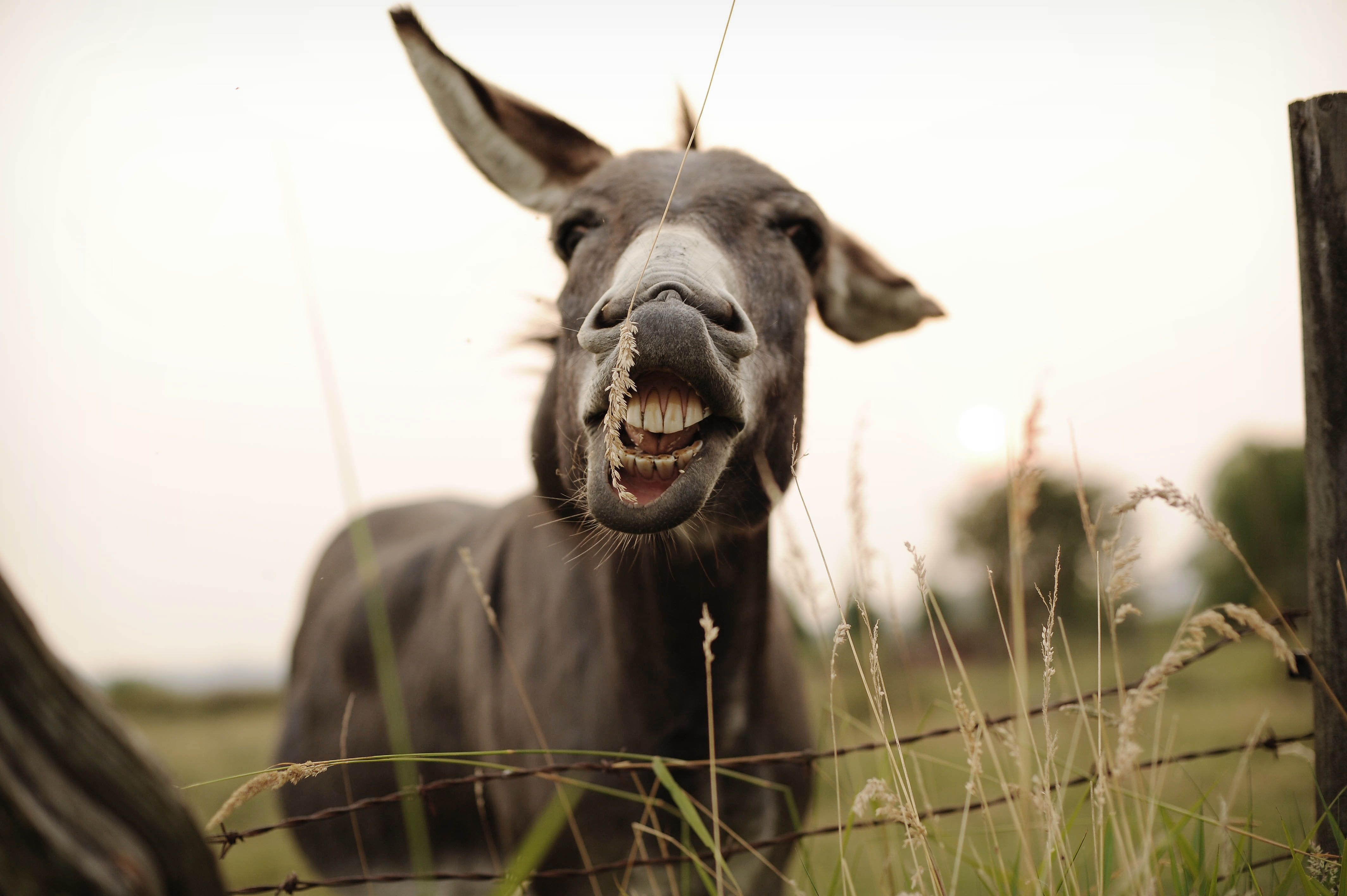 Donkey standing at fence.