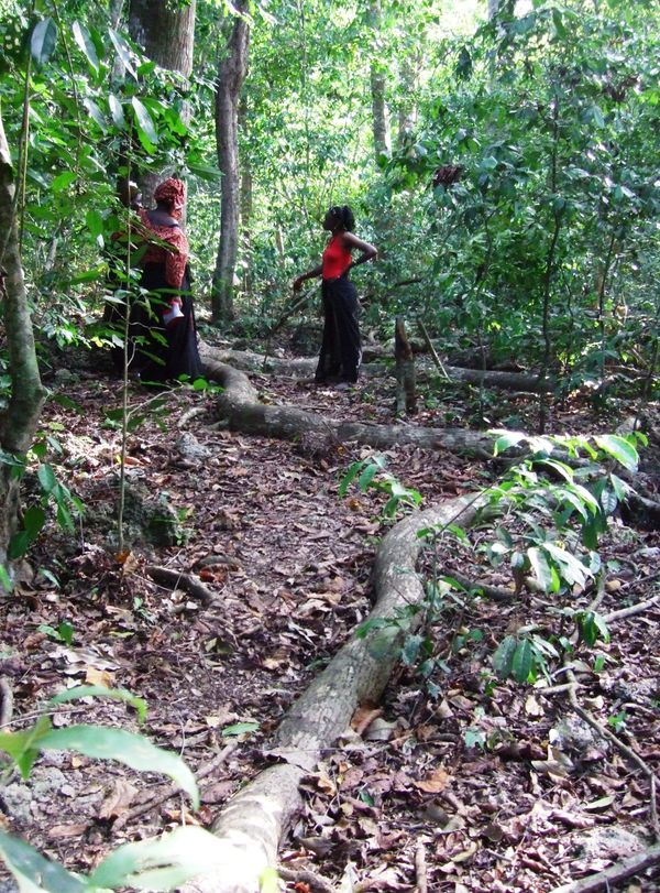 "These <a href=""http://whc.unesco.org/en/list/1231"">forests</a> contain the remains of ancient villages (or kayas) which were"