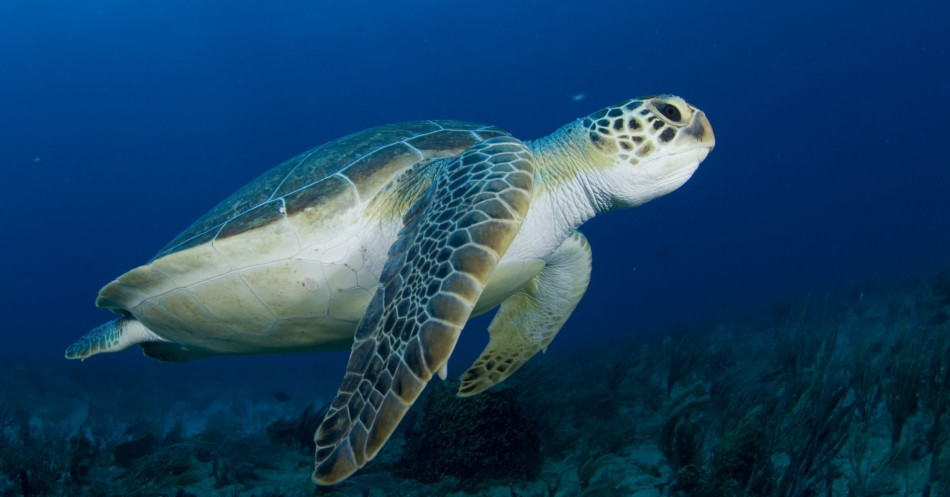 how to help sea turtles in florida