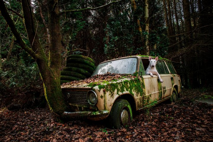 Claire driving an abandoned car in Belgium.