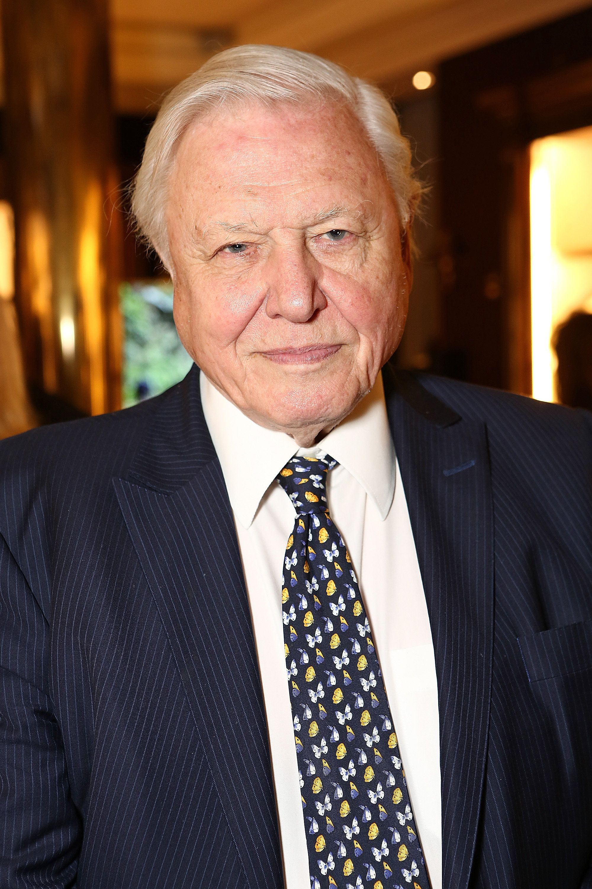 LONDON, ENGLAND - SEPTEMBER 22:  Sir David Attenborough attends The World Land Trust screening of 'The Orchids of Banos' supported by Alfred Dunhill on September 22, 2015 in London, England.  (Photo by David M. Benett/Dave Benett/Getty Images for Alfred Dunhill Ltd)