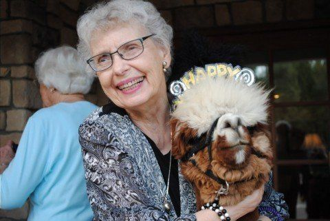 Llamas and alpacas may not be traditional therapy animals, but they're certainly effective in bringing joy everywhere they go.