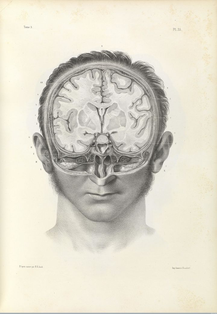 Vertical cross section of the human brain, 1844 lithograph.