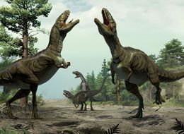 Dinosaurs May Have Danced Like Lovebirds To Woo Their Mates
