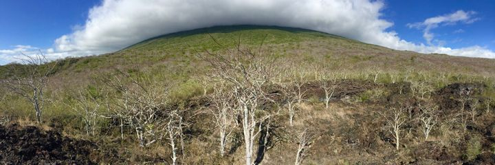 Volcano Wolf – the highest point of the Galápagos Islands.