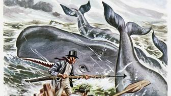Starbuck hunting whales, illustration for Moby Dick by Herman Melville (1819-1891), Belgian edition of 1956.