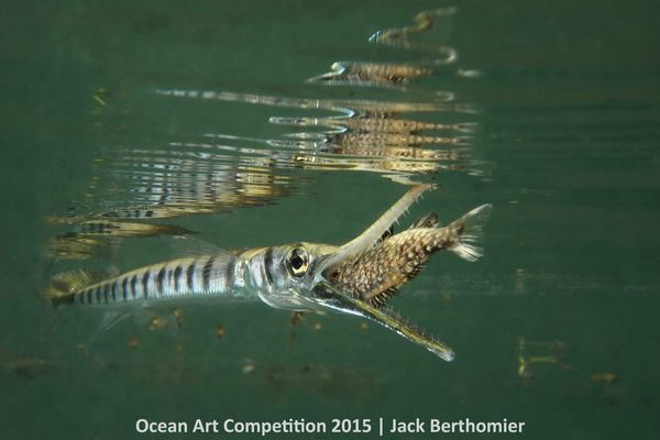 "1st Place, Compact Marine Life Behavior: ""The picture <a href=""http://www.uwphotographyguide.com/oa15-1st-compactbehavior"" ta"