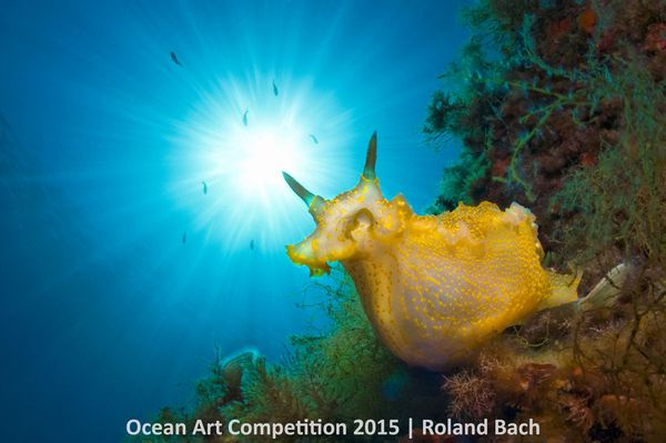 "1st Place, Nudibranchs: ""This photo was taken on the North coast of the Balearic island Minorca on a place called Punta den S"