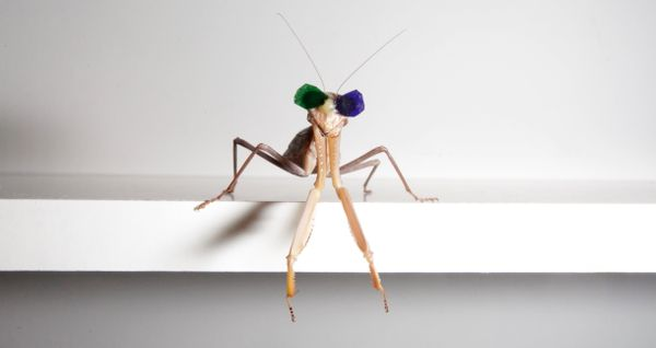 The mantises were ready for a night at the movies.