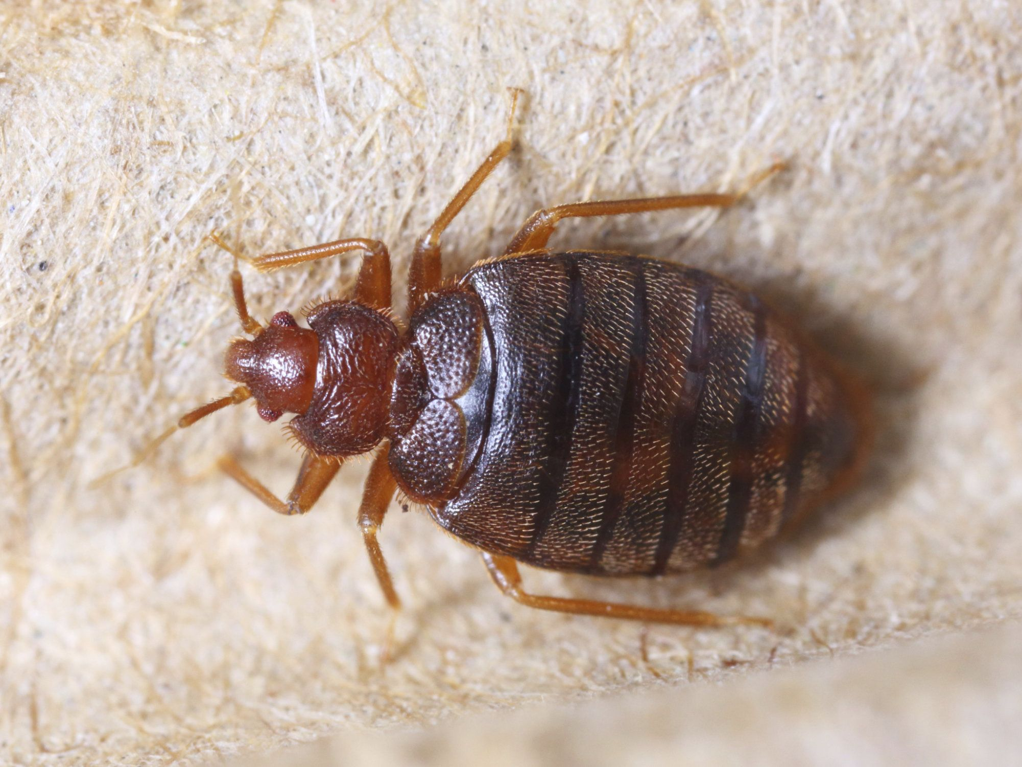 Detroit has been named the most bedbug-infested city in the U.S.