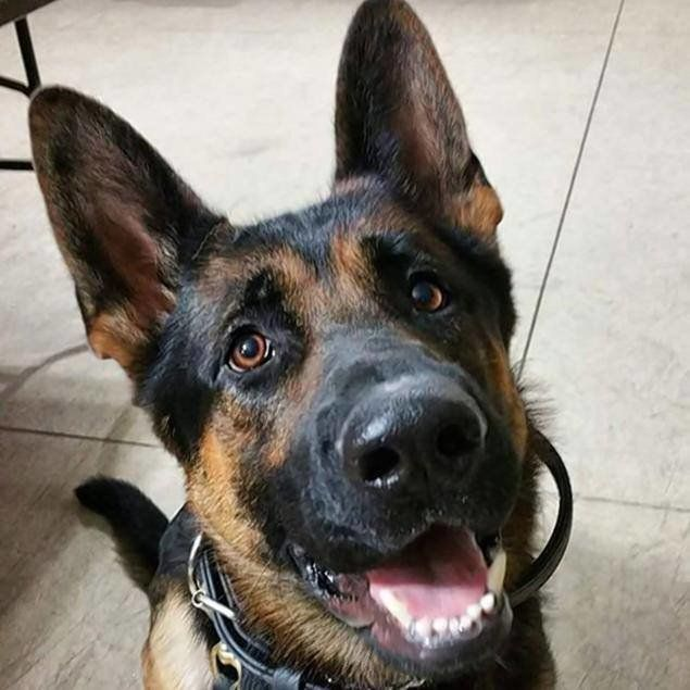 Jethro, a K-9 with Ohio's Canton Police Department, died Sunday after a gunfight with a burglary suspect, police said.