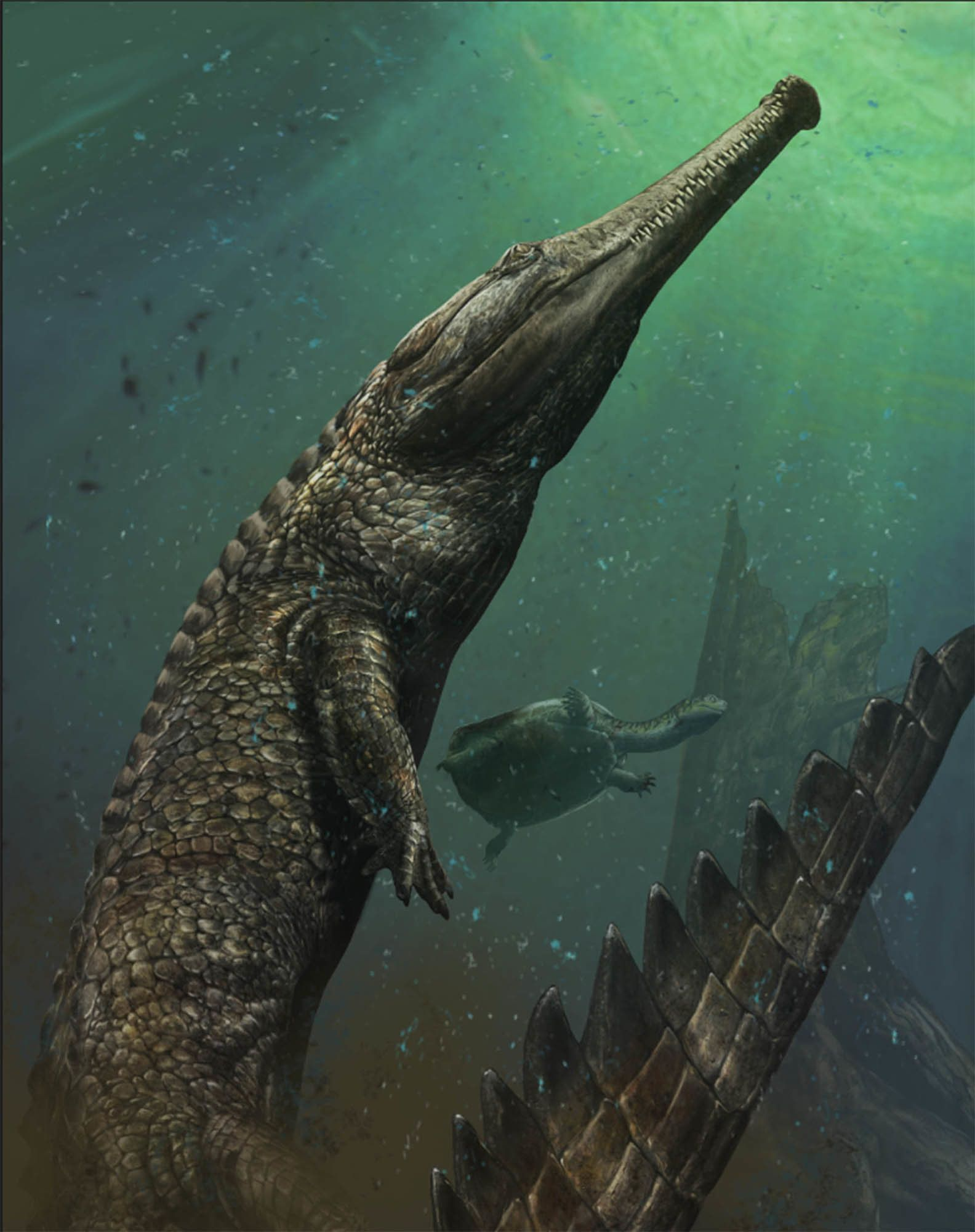 An artist's illustration of Machimosaurus.