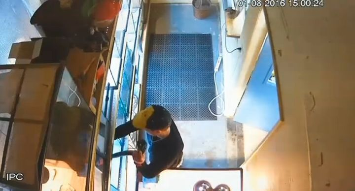 Surveillance video appears to show a man caught in the act of stealing a python from a pet store by stuffing it down his pant