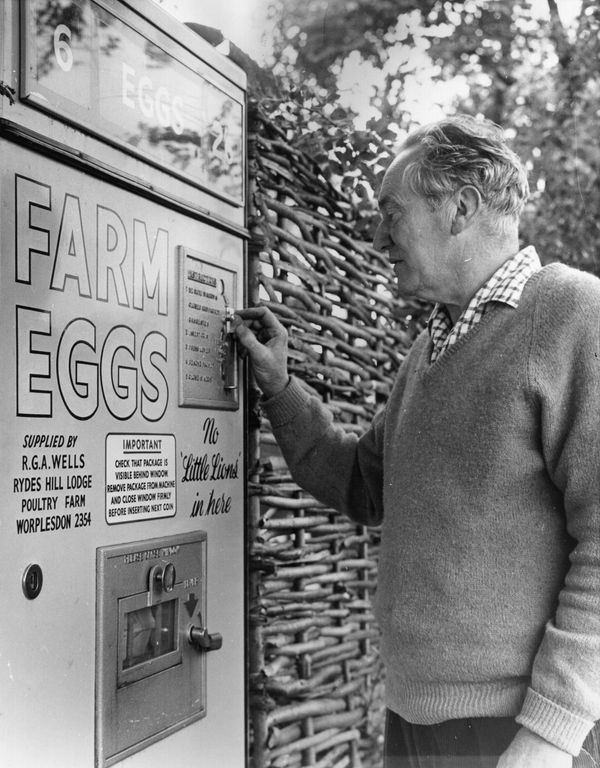 An English man demonstrates an egg vending machine at the gate of his farm on Sep. 9, 1963.