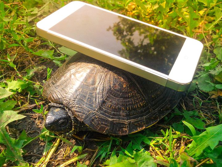 You can now pay to have someone call your friend and pretend to be a turtle. Like this one.