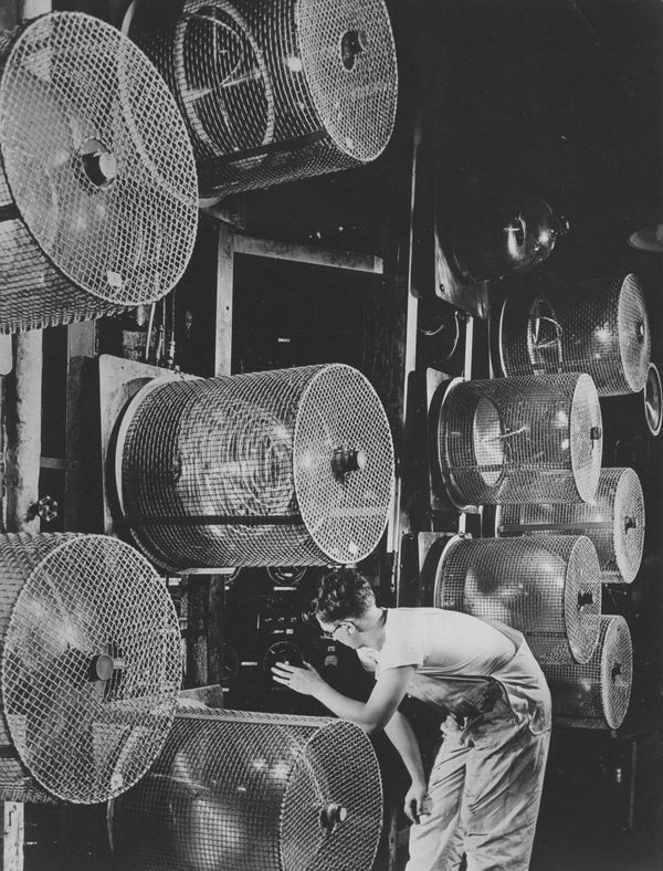 A worker adjusting the dial on a machine used for Vitamin A extractionin1950. (A number of cooling fans dot the s
