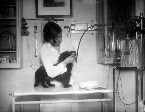 Ultraviolet rays beingused to cure a dog's ailmentsin1920.