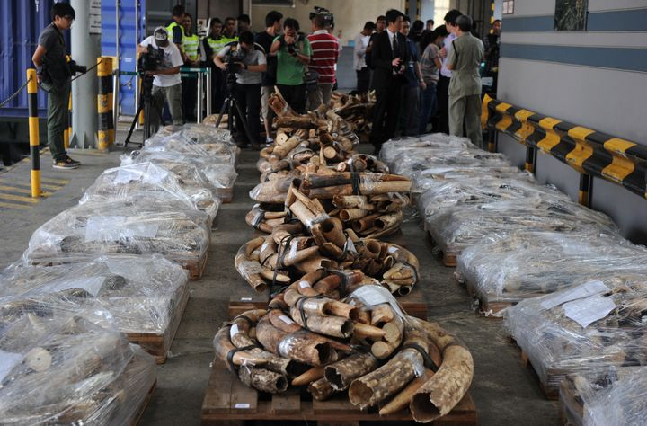 Ivory tusks seized during an anti-smuggling operation in Hong Kong in 2012.