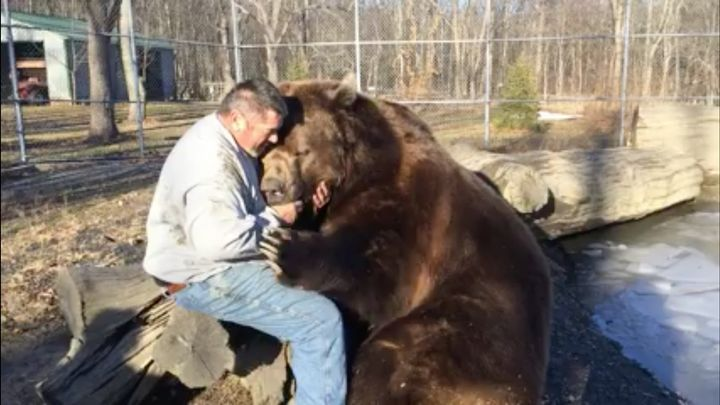 Jim Kowalczik of the Orphaned Wildlife Center is seen playing with one of their Kodiak bears.