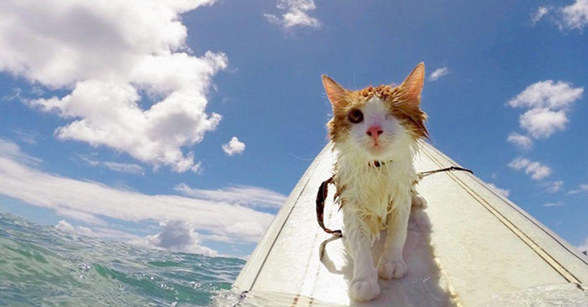 Kuli The One Eyed Cat
