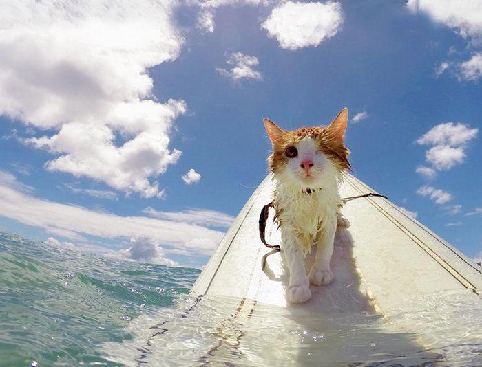 Hang ten, kitty!