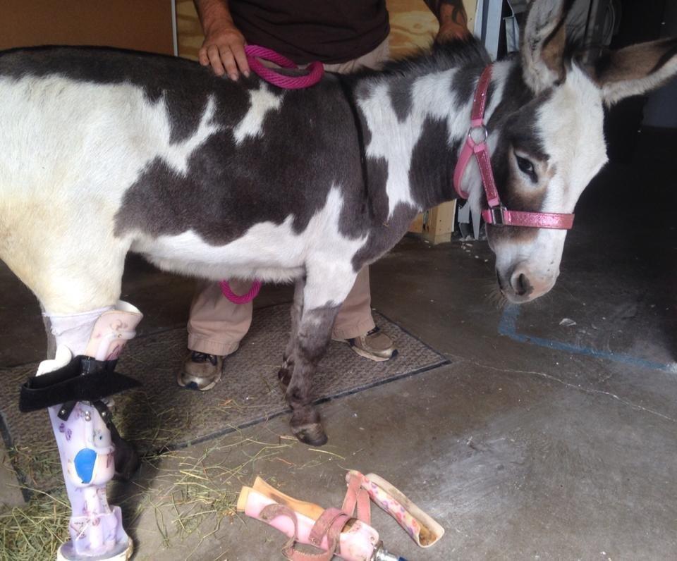 Bella Burro testing out a prosthetic leg.