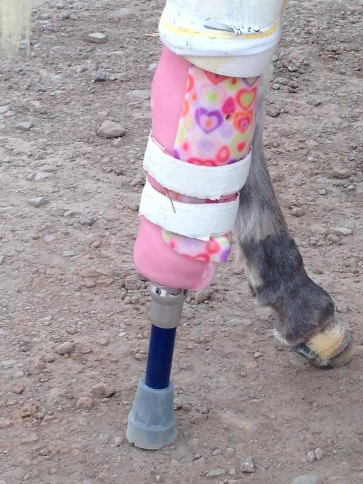 Amputating Bella's leg cost about $10,000, while a prosthetic cost around $2,500.
