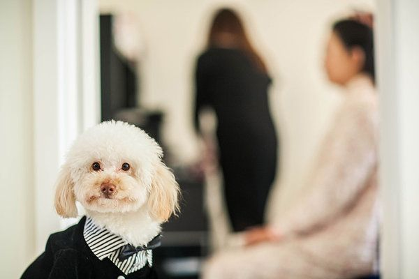 **MANDATORY PICTURE CREDIT** PIC BY: FANG WAN / ISPWP / CATERS NEWS (Pictured: Dressed-up dog) - These hilarious photos will leave people WEDDING themselves with laughter. The images - which include photobombs, wardrobe malfunctions and unexpected animal behaviour - have been released by the International Society of Professional Wedding Photographs (ISPWP). Each year the society holds quarterly competitions, celebrating a variety of the best image from couples special days. Other categories in the ISPWPs completions include the likes Getting Ready, First Dance, Family Love, and a selection of portrait possibilities. - SEE CATERS COPY