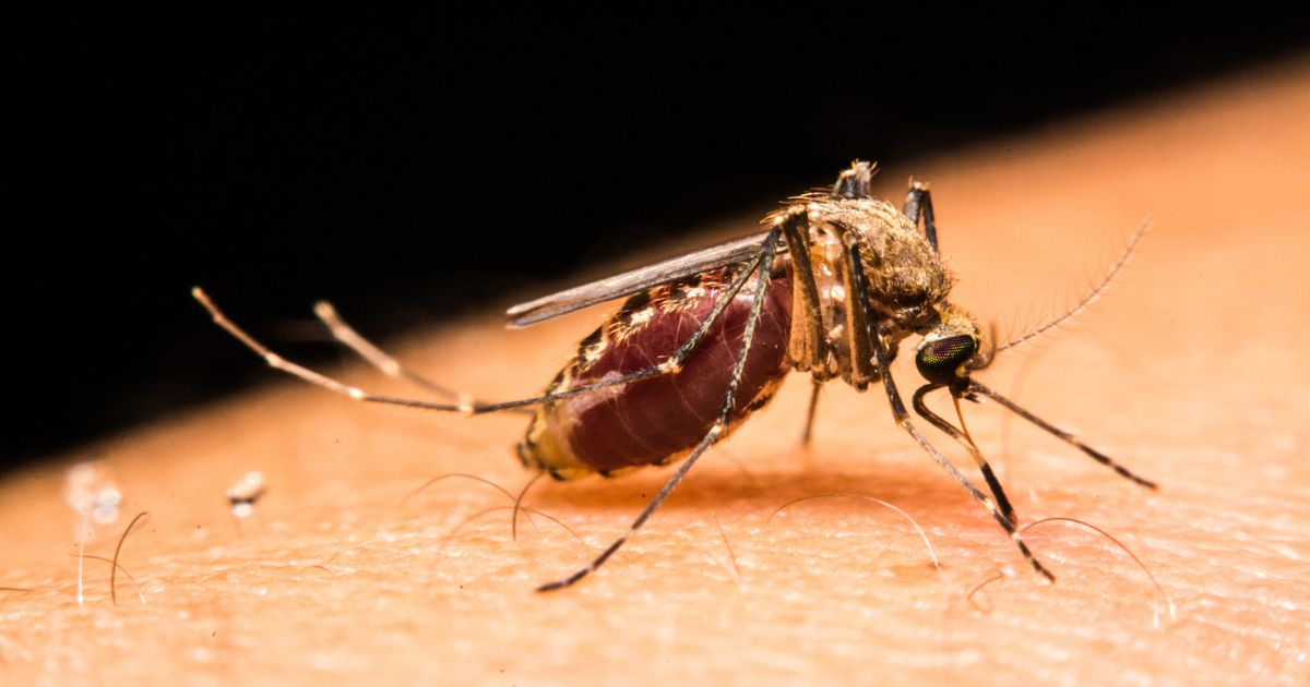 Pregnant Women Shouldn T Travel To Countries With Zika