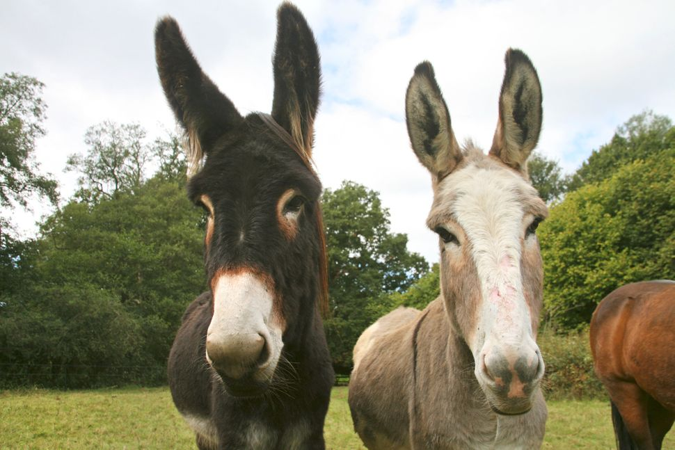 Donkeys in the pasture at Cotchford Farm.
