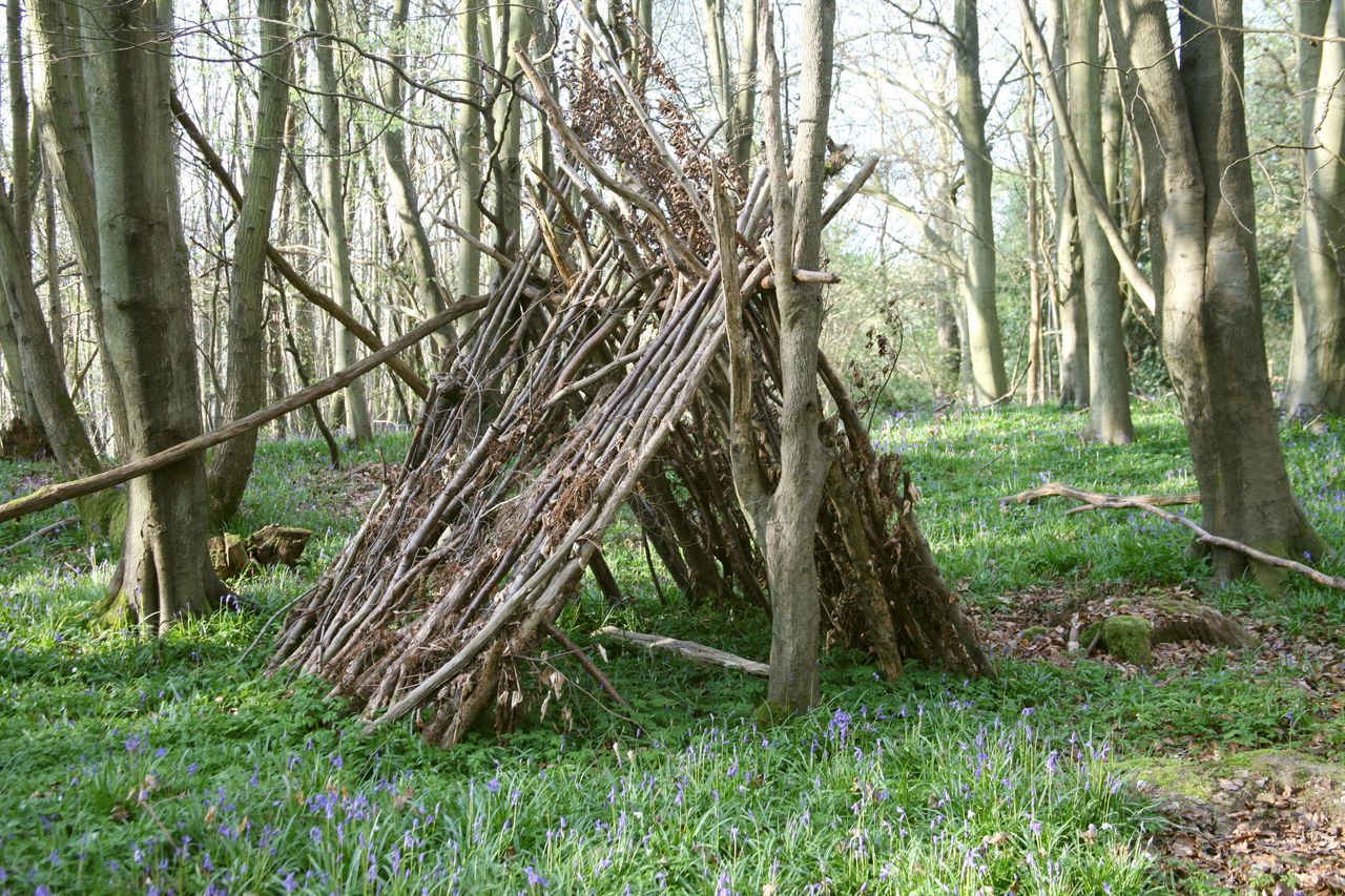 Eeyore houses spring up in the woods of Ashdown Forest.