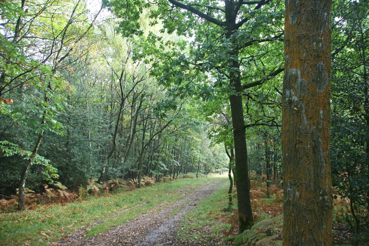 An autumn trail of bracken leads to the ghyll that inspired the North Pole Expotition.