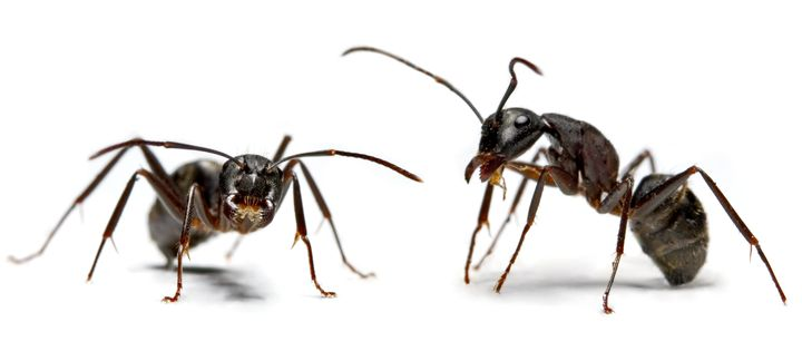 Ants have lots of surface area, but very little volume.
