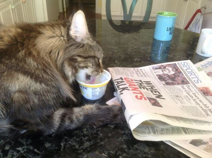 What cat doesn't enjoy the morning paper?