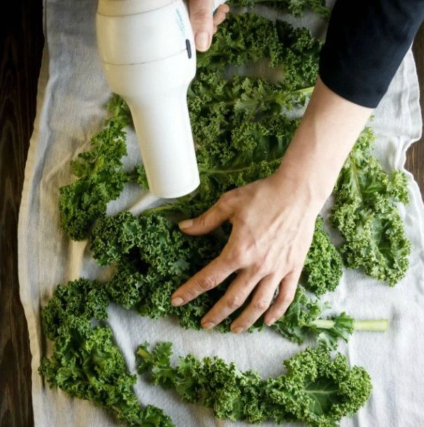 How Your Blow Dryer Can Make The Best Kale Chips