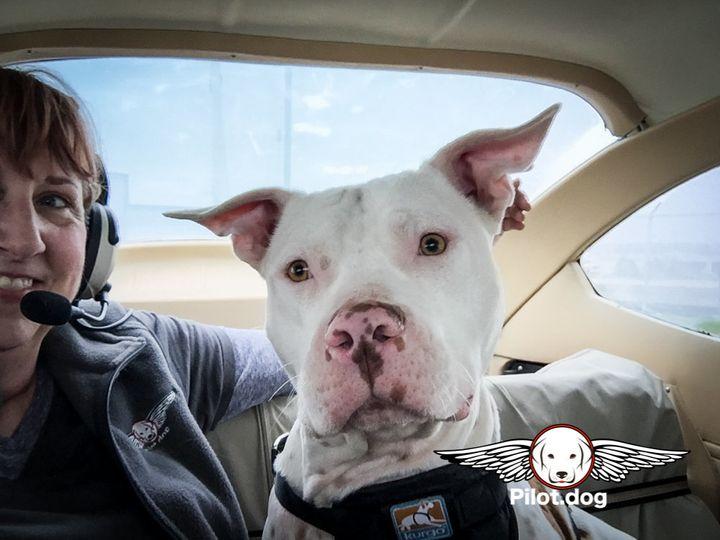Pam Rhode and Goblin prepare for his rescue flight to Pennsylvania.