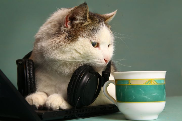 This cat is both stressed and very, very excited about his to-listen list.