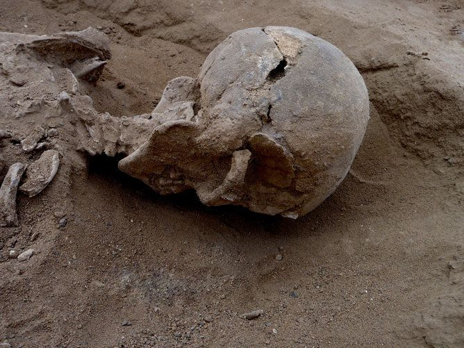 Skull of a man with multiple lesions on the side, probably caused by a club. Image by Marta Mirazon Lahr, enhanced by Fabio L