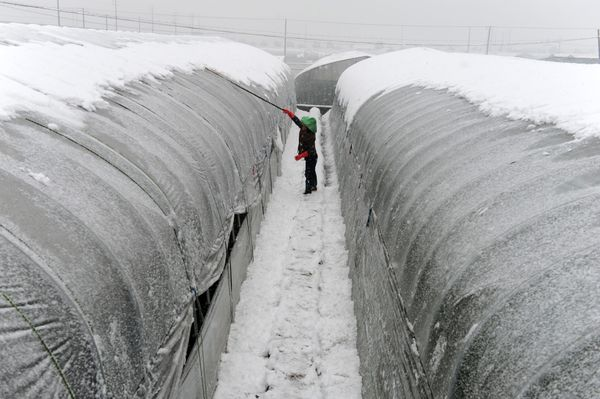 A woman removes snow on top of a greenhouse in Dongyang, Zhejiang province, on Jan. 22.