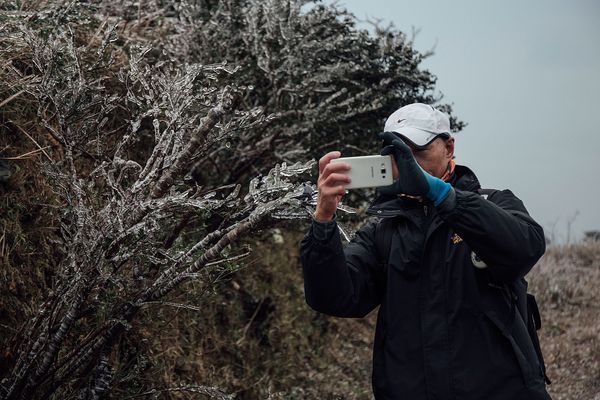 A hiker takes a photo of a frozen plant on Kowloon Peak.